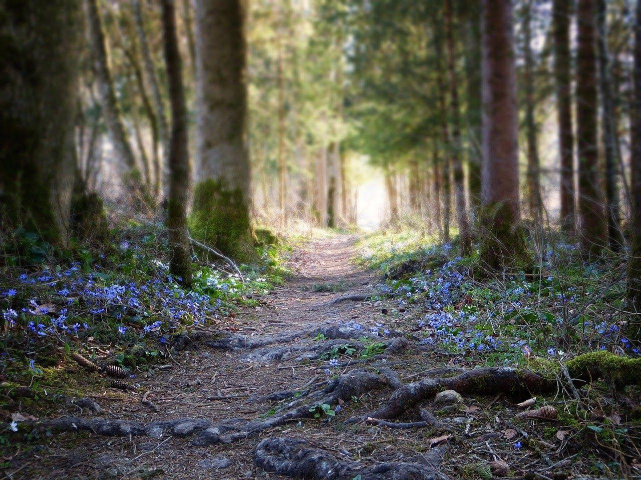 idées apéro léger forêt